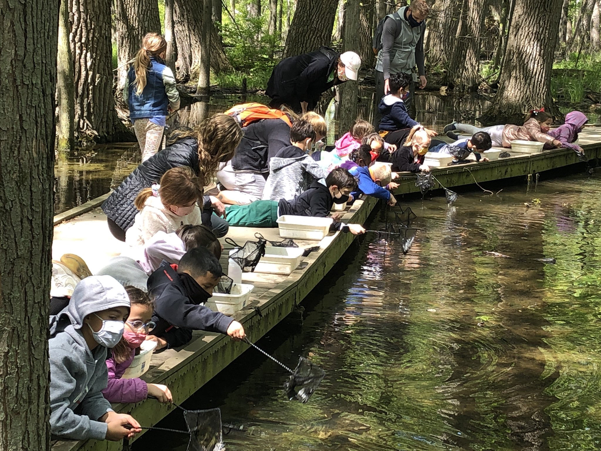 First graders from Thorpe Creek Elementary School in Indiana dip for aquatic macroinvertebrates in the swamp. (Photo provided by U.S. Department of Education)